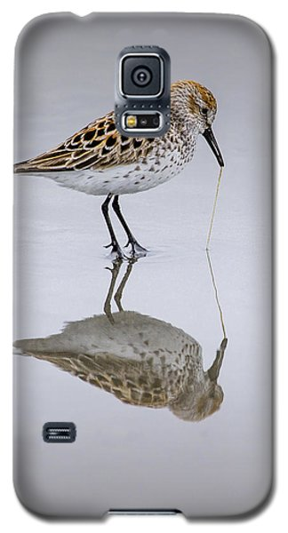 Sandpiper Pull Galaxy S5 Case by Sonya Lang