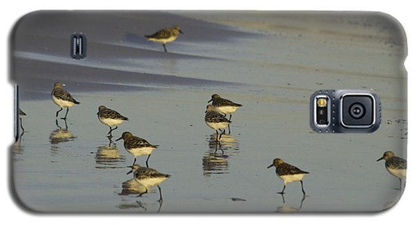 Sandpiper Sunset Reflection Galaxy S5 Case