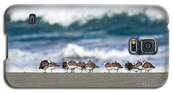 Sandpipers Keeping Warm On A Very Cold Day At The Beach Galaxy S5 Case