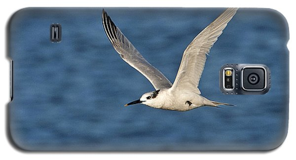 Galaxy S5 Case featuring the photograph Sandwich Tern by Paul Scoullar