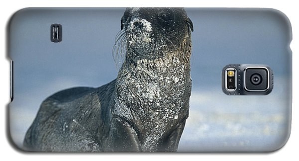 Galaxy S5 Case featuring the photograph Sandy Sea Lion by Chris Scroggins