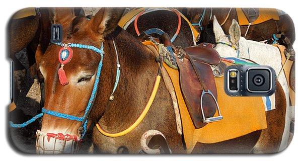 Santorini Donkeys Ready For Work Galaxy S5 Case by Colette V Hera  Guggenheim