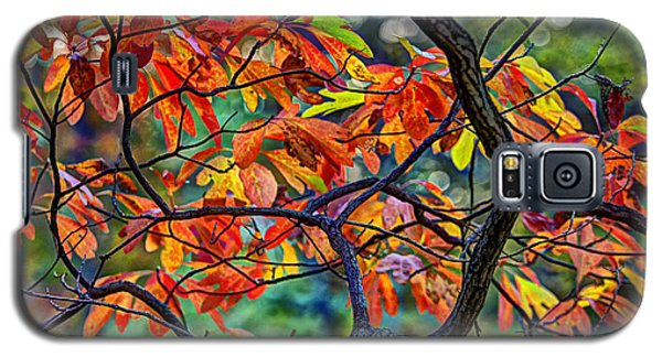 Galaxy S5 Case featuring the photograph Sassafras Leaves by Skip Tribby