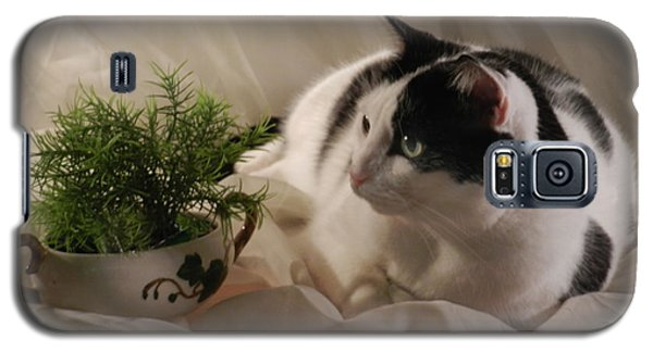 Sassy And The Fern Galaxy S5 Case