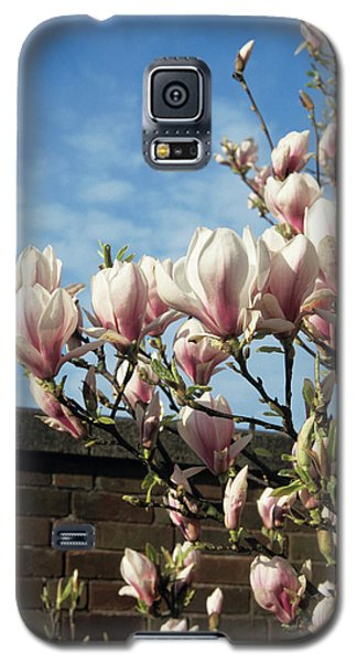 Saucer Magnolia Galaxy S5 Case - Saucer Magnolia Flowers by Jim D Saul/science Photo Library