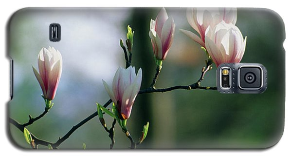 Saucer Magnolia Galaxy S5 Case - Saucer Magnolia Flowers by Terry Mead/science Photo Library