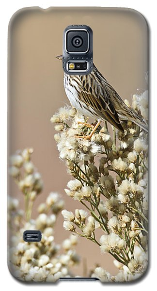 Galaxy S5 Case featuring the photograph Savannah Sparrow by Bryan Keil