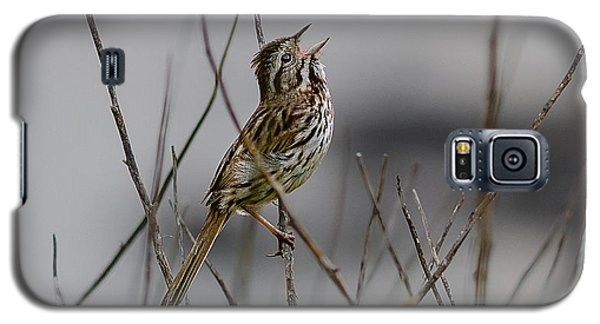 Galaxy S5 Case featuring the photograph Savannah Sparrow by Marty Saccone