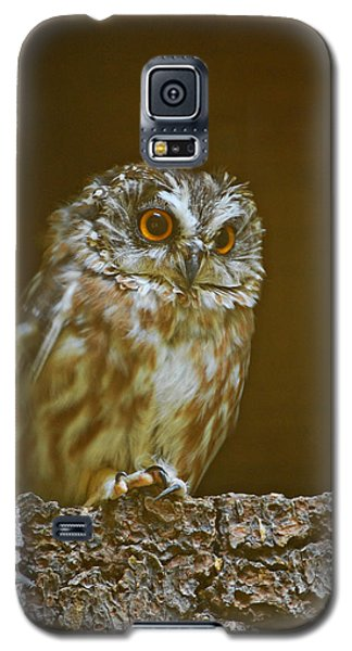 Saw-whet Owl Galaxy S5 Case