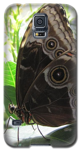 Scarce Morpho Galaxy S5 Case by Jennifer Wheatley Wolf