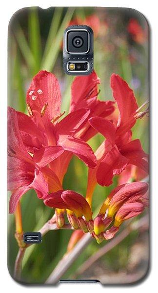 Scarlet Beauty 1 Galaxy S5 Case by Pema Hou