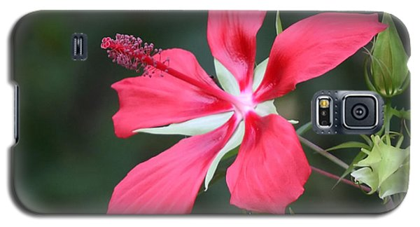 Scarlet Hibiscus #3 Galaxy S5 Case