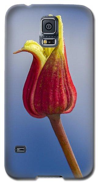 Scarlet Leatherflower Galaxy S5 Case