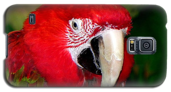 Galaxy S5 Case featuring the photograph Scarlet Macaw by Bill Swartwout