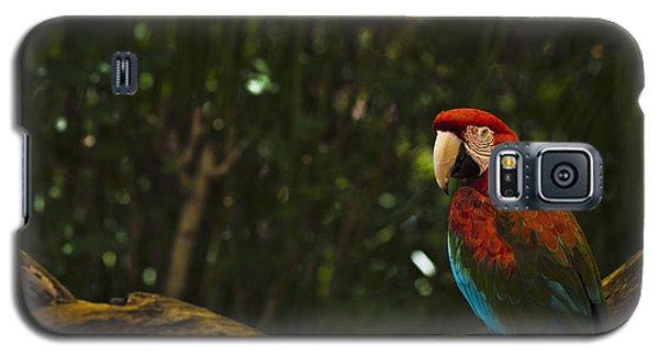 Scarlet Macaw Profile Galaxy S5 Case