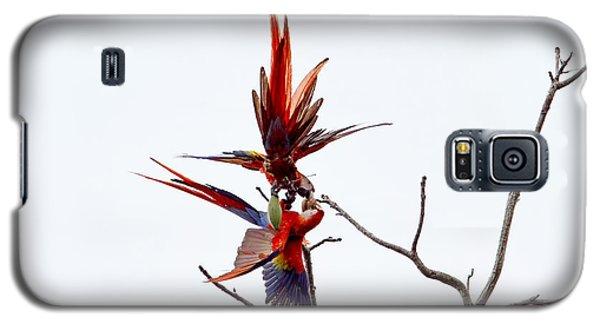 Galaxy S5 Case featuring the photograph Scarlet Mackaws Fighting by Peggy Collins