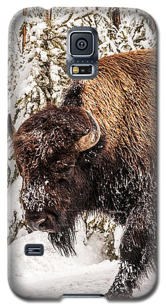 Scary Bison Galaxy S5 Case