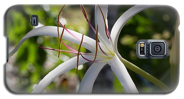 Spider Lilly Flower Galaxy S5 Case