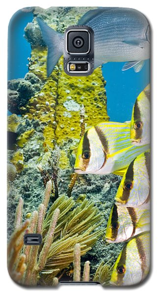 School Gathering Galaxy S5 Case