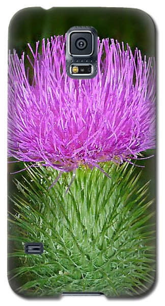 Scottish Thistle  Galaxy S5 Case