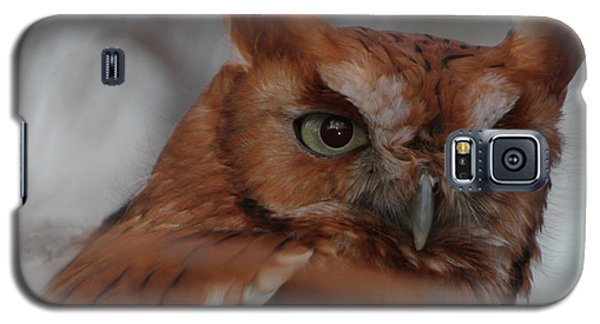 Galaxy S5 Case featuring the photograph Screech Owl by Constantine Gregory
