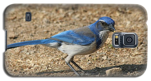 Galaxy S5 Case featuring the photograph Scrub Jay by Bob and Jan Shriner