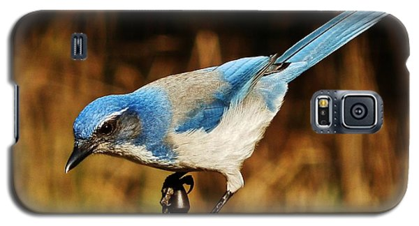 Galaxy S5 Case featuring the photograph Scrub Jay by VLee Watson