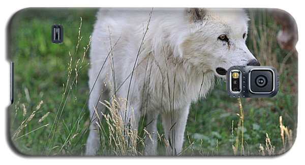 Scruffy White Wolf Galaxy S5 Case