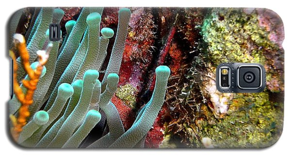 Galaxy S5 Case featuring the photograph Sea Anemone And Coral Rainbow Wall by Amy McDaniel