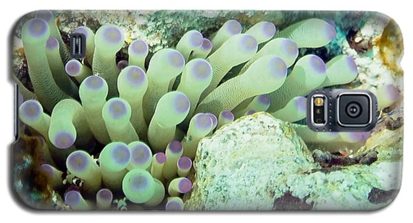 Galaxy S5 Case featuring the photograph Sea Anemone With Squat Anemone Shrimp Family by Amy McDaniel