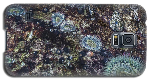 Galaxy S5 Case featuring the mixed media Sea Anenome Jewels by Terry Rowe