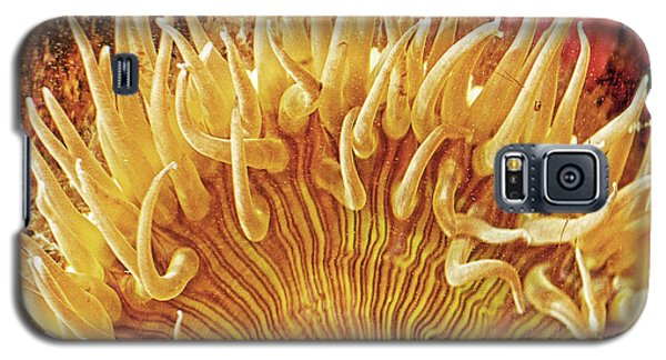 Sea Anenome Stretch Galaxy S5 Case by Artist and Photographer Laura Wrede