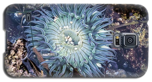Galaxy S5 Case featuring the mixed media Sea Anenome by Terry Rowe