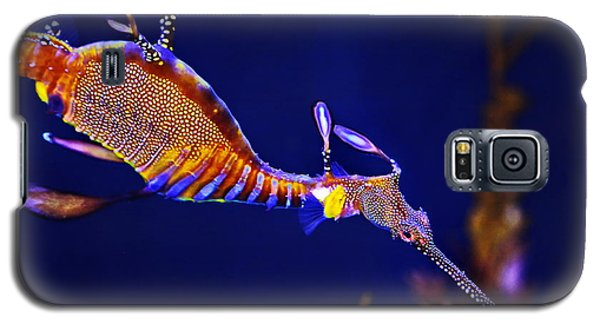 Sea Dragon Galaxy S5 Case