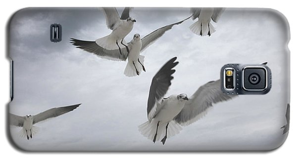 Sea Gull Aggression Galaxy S5 Case