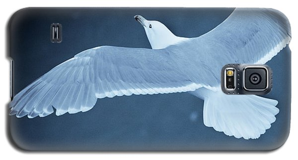 Sea Gull Over Icy Water Galaxy S5 Case