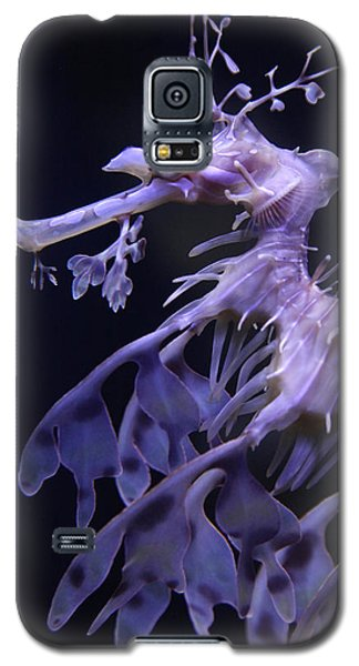 Sea Horse Galaxy S5 Case