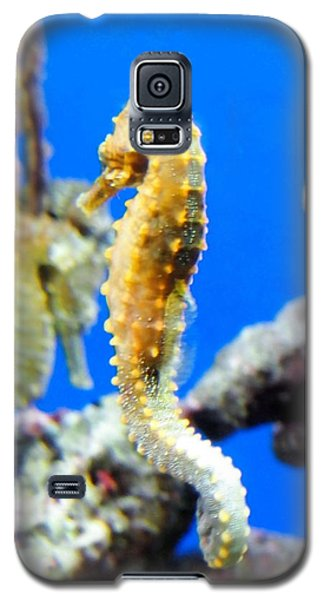 Sea Horses Galaxy S5 Case by Amy McDaniel