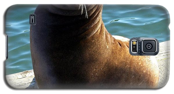 Galaxy S5 Case featuring the photograph Sea Lion Basking In The Sun by Chalet Roome-Rigdon