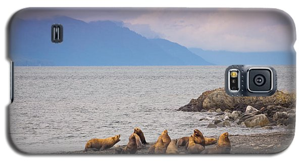 Galaxy S5 Case featuring the photograph Sea Lion Bulls by Janis Knight