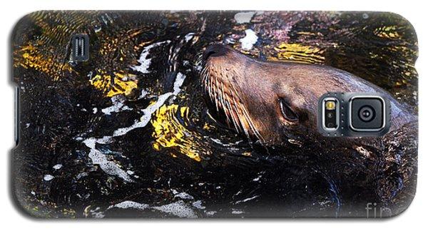 Sea Lion Posing For A Headshot Galaxy S5 Case