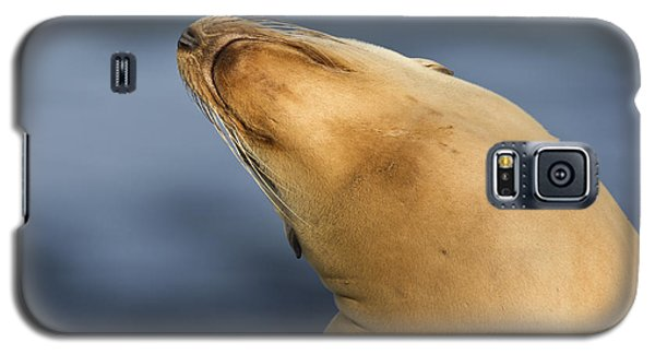 Galaxy S5 Case featuring the photograph Sea Lion Stretch by Bryan Keil