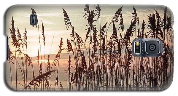 Spectacular Sea Oats At Sunrise Galaxy S5 Case by Belinda Lee