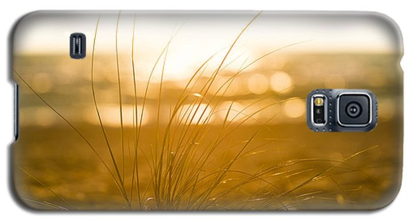 Sea Oats Sunset Galaxy S5 Case by Sebastian Musial