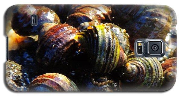Galaxy S5 Case featuring the photograph Sea Shells by Karen Horn