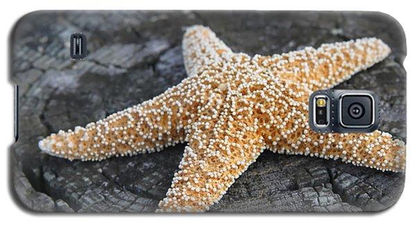 Sea Star On Post Galaxy S5 Case