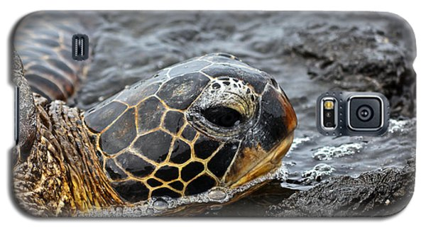 Sea Turtle Puako Tidepools Galaxy S5 Case