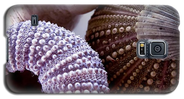 Sea Urchins  Galaxy S5 Case by Colleen Kammerer