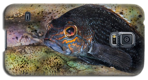Seabass In A Shell Galaxy S5 Case