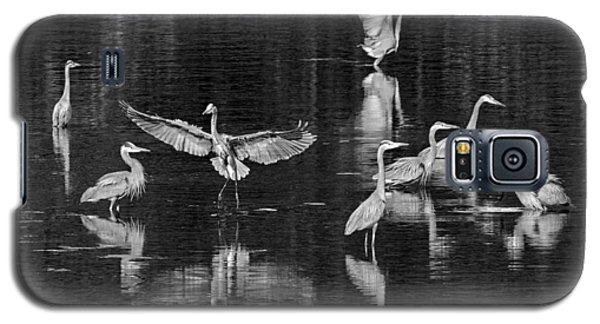 Seabeck Herons Galaxy S5 Case